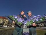 Der Karolinenplatz wird bepflanzt