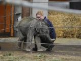 Eine Tierpflegerin mit dem zwei Wochen alten Elefantenmaedchen Jamuna Toni, 2010