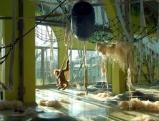 Das im Juli 2007 eroeffnete Orang-Utan Gehege gilt als besonders artgerecht