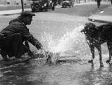 Hitzwelle in Paris: Ein Mann spritzt seinen Hund mit Wasser ab, 1935