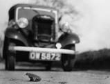Froschwanderung, 1930er