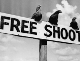 Zum Abschuss freigegebene Vögel, 1937