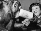Liesl Karlstadt teilt ihre Maß Bier mit einem Schimpansen