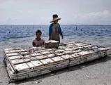 Coralcutter am Korallenriff von Serangan, Bali 2009