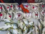 Fish market, 2012