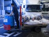 Workers transport tuna fish, 2008