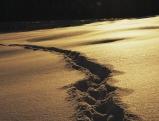 Spur im Tiefschnee bei Sonnenuntergang, 2006