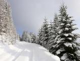 Verschneiter Waldweg im Kaernten, 2007