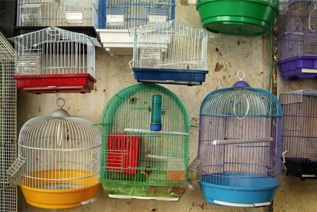 Vogelhändler in der Altstadt von Fes,Marokko