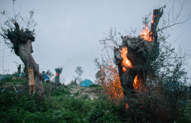Ein Olivenbaum wurde angezündet und brennt nahe dem wilden Camp Moria. - Moria ist das größte Lager für Geflüchtete in Europa. Auf der griechischen Ägäisinsel Lesbos wurde ein so genannter Hotspot eingerichtet, an dem Asylverfahren bearbeitet und entschieden werden sollen. Nach und nach wird das Camp immer voller und mittlerweile hat sich ein wildes Areal mit kleinen Hütten aus Palletten und Plane gebildet. Zehntausende wohnen und warten hier. Es gibt nur unregelmässig fliessendes Wasser. Schwere Krankheiten gehen um. Im Februar 2020 ist die Lage besonders prekär.