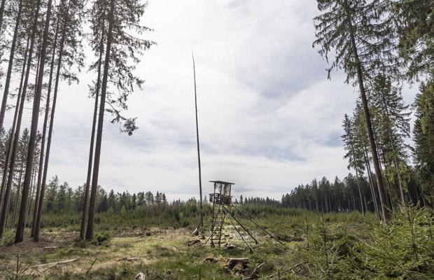 """Einsamer Hochsitz auf einer Lichtung in Oberbayern. Windbruch in Fichten Monokultur. Aus dem Projekt """"Weidmannsheil"""". 21.04.2020, Starnberg, Bayern, Deutschland, 2020."""